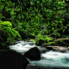 Green and fresh by Wahid Hasyim - Landscapes Waterscapes ( waterscape, landscape photography,  )