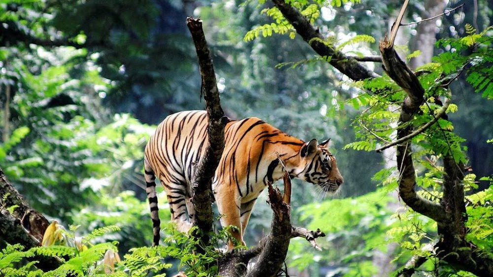 thekkedy-places-to-visit-in-south-india_image