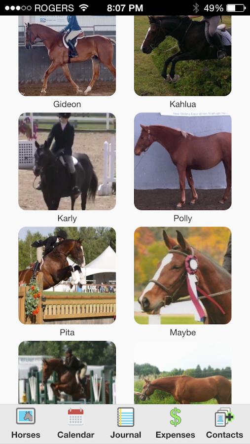 HorseNotes - screenshot