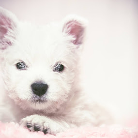 by Kjell Kasin - Animals - Dogs Puppies