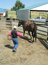 Photo: Other great lariat exercises include haunches-in.