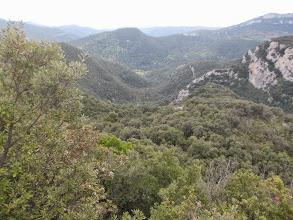 Photo: on devine à peine dans la végétation les nombreux méandres du Riumajor.A droite le Puig d'en Roger et ses cingles impréssionnants