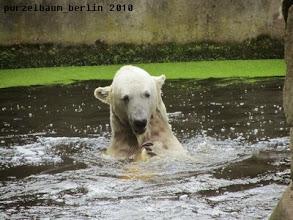 Photo: Wasserspassbaerchen Knut :-)
