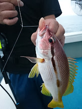 Photo: ・・・確かに。 和歌山でもよく釣れるそうです。