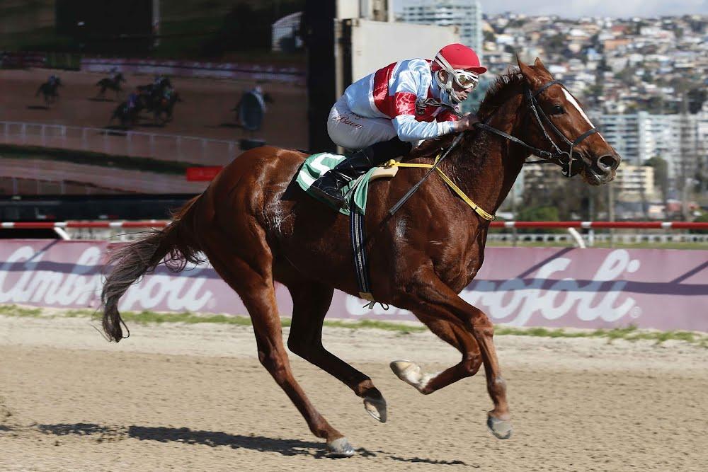 Rey Palmeño (Don Cavallo) gana Handicap (1100m-Arena-VSC).