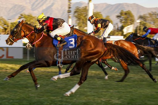 Noble Pensamiento (Passion for Gold) brilló en Handicap (1200m-Pasto-CHS). - Staff ElTurf.com
