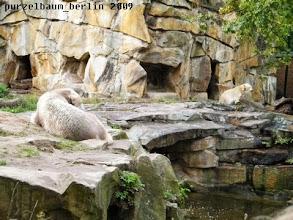 Photo: Positionswechsel - Knut auf dem Sandhaufen und Gianna hinter dem Baumstamm ;-)