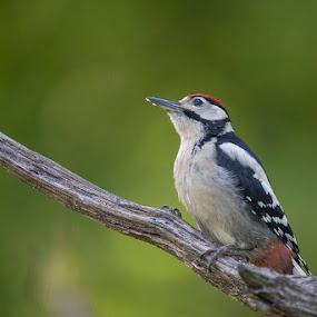 by Denis Keith - Animals Birds (  )