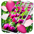 Spring Petals Live Wallpaper file APK for Gaming PC/PS3/PS4 Smart TV