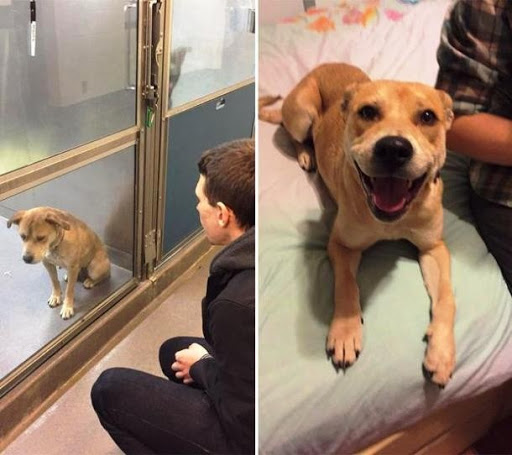 """25 fotos """"antes e depois"""" de cães que foram resgatados da rua"""