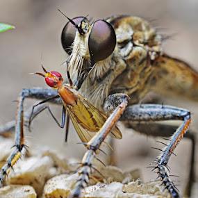 SARAPAN PAGI by Dhanu Wijaya - Animals Insects & Spiders