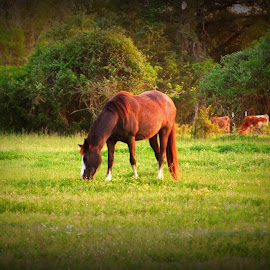 Big Beauty by Brenda Shoemake - Animals Horses