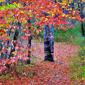 Blanket of Leaves by Kathy Woods Booth - City,  Street & Park  City Parks ( fall colors, color, autumn, red leaves, landscape,  )