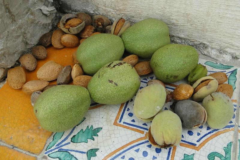 tempo di raccogliere la frutta secca di alfinara