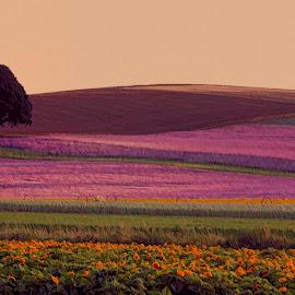 by Judy Heitzman - Landscapes Prairies, Meadows & Fields