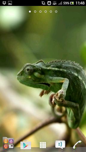 Chameleon video wallpapers