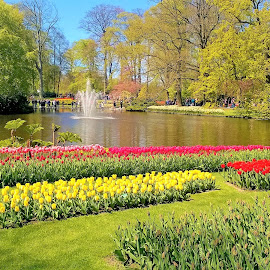 A lake with fountain  in a spring blooming park by Svetlana Saenkova - Instagram & Mobile Other ( spring, blooming, springtime, keukenhof, holland, sunny, lake, park,  )