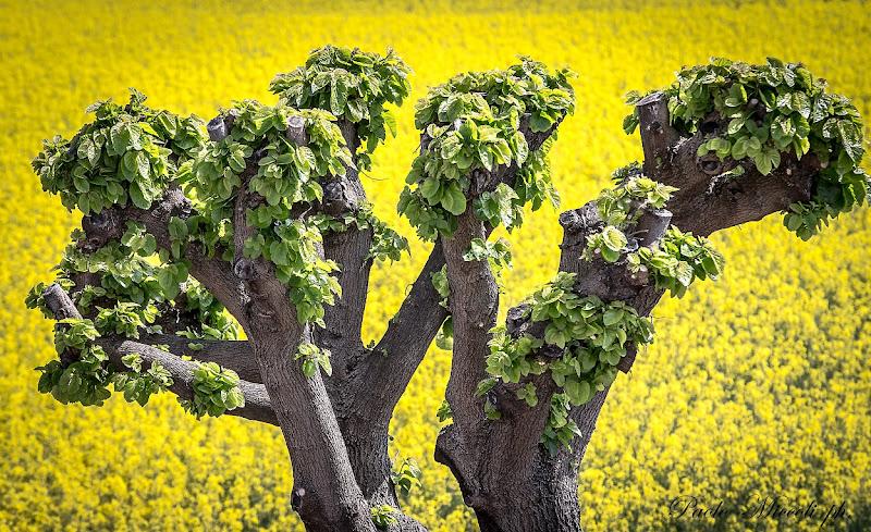 sfondo giallo di paolo_miccoli