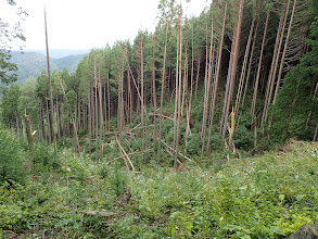 谷間風で木が折れて