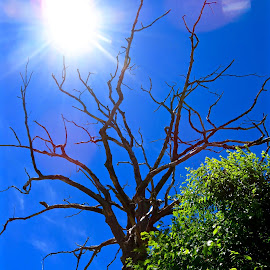Trunk of Tree Against the Sun by Michael Villecco - Nature Up Close Trees & Bushes (  )