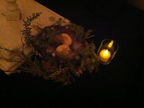 Photo: Bird's nest