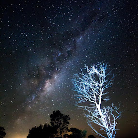 Highlighted tree at night by Gill Fry - Landscapes Starscapes ( milkyway, tree, stars, night, dead tree, milky way, mood factory, color, lighting, moods, colorful, light, bulbs, mood-lites,  )