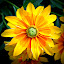Yellow Flower by Gina Gomez - Novices Only Flowers & Plants ( fauna, art, flowers, flower )