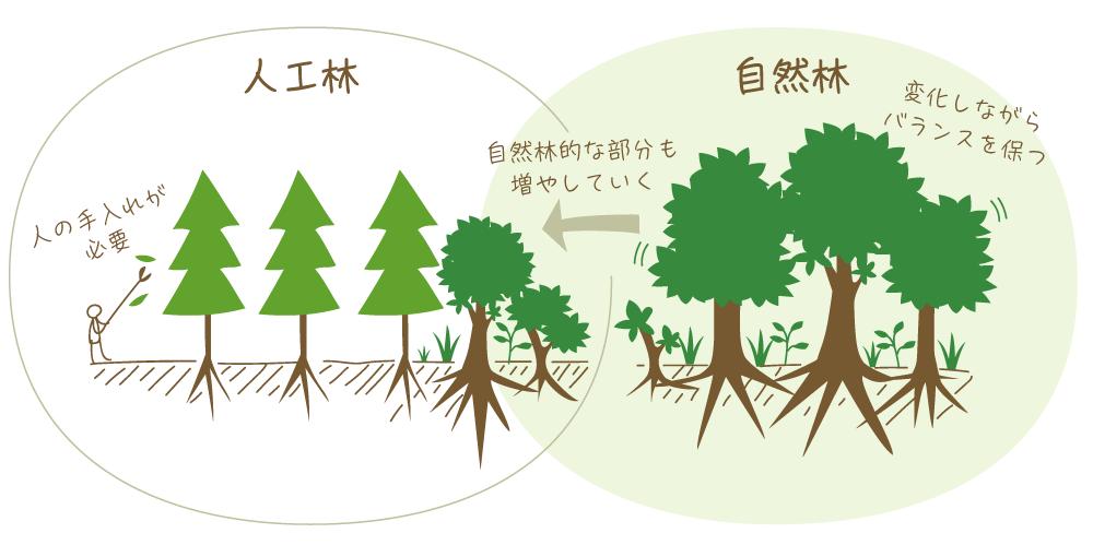 森メタファーの組織論