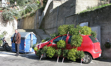 Photo: Mistletoe anyone?