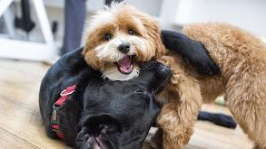 Puppy Love thumbnail