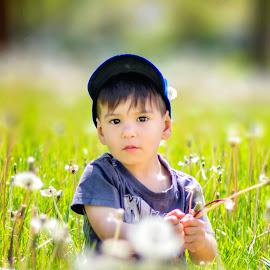 In a Dandelion Field by Sue Matsunaga - Babies & Children Child Portraits