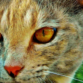 Spying on you by James Cole - Animals - Cats Portraits