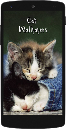 Download Cute Cat Hd Wallpapers Free For Android Cute Cat Hd Wallpapers Apk Download Steprimo Com