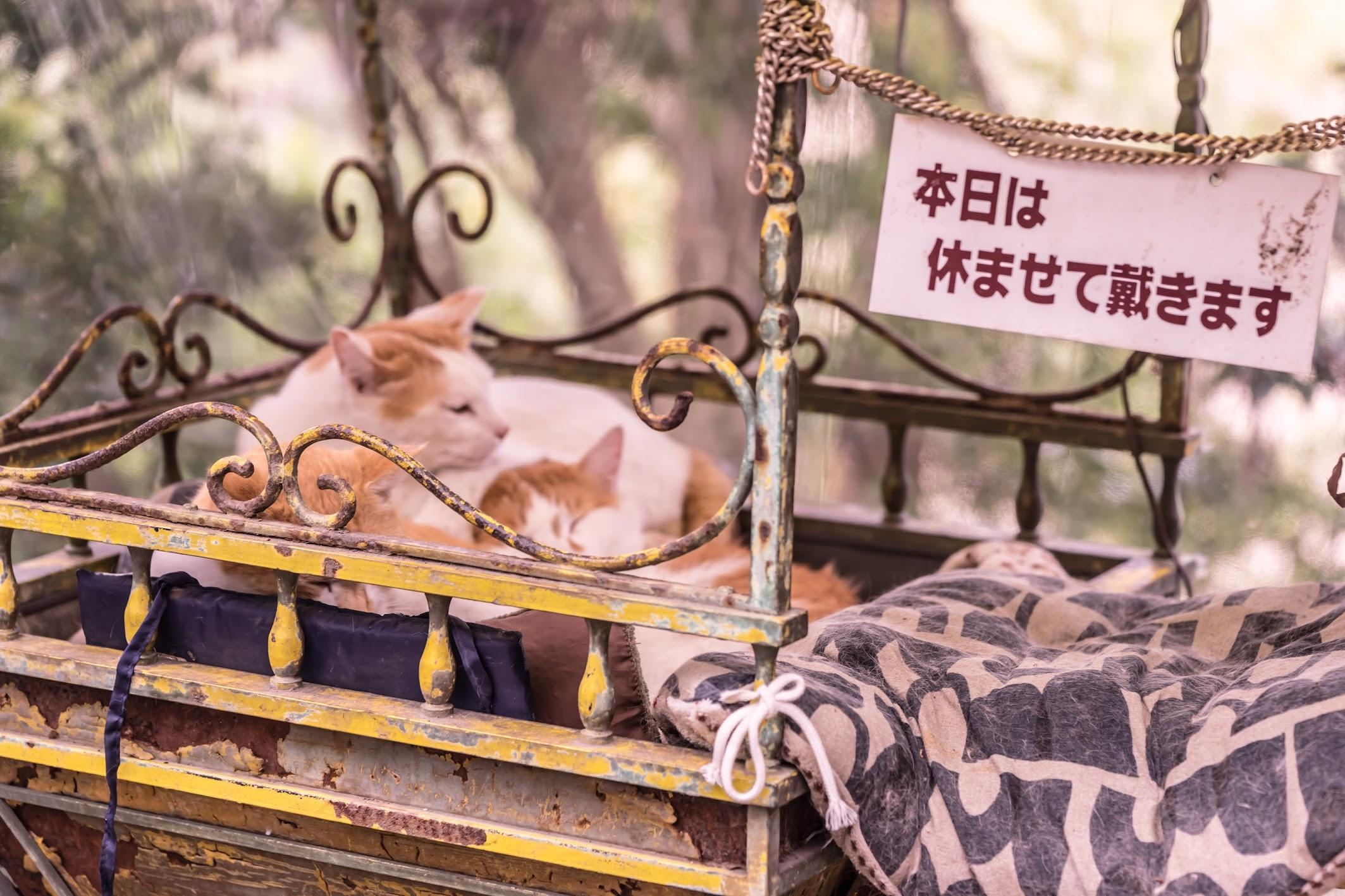 京都 哲学の道 猫 喫茶店