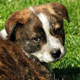jeb by Tim Bennett - Animals - Dogs Puppies
