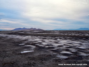 Photo: Salt puddles at Great Salt Lake shore
