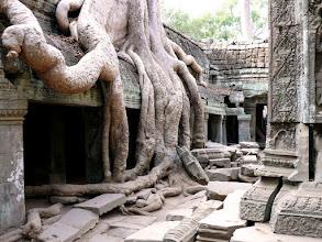 Photo: Ta Prohm, CAMBODIA
