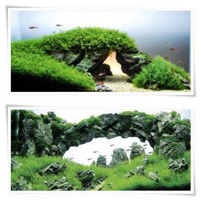 ... Aquascape Aquarium Designs Screenshot 3