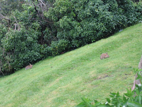 Photo: Die Hasen beim Castle sind auch noch da