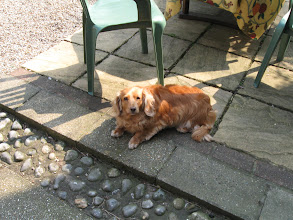 Photo: Ellie, one of Joy's dogs, sunning in the garden.