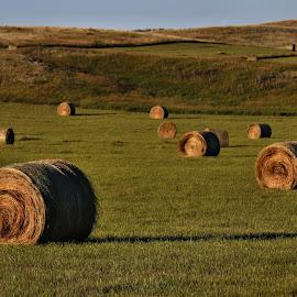 Bales by Tim Day - Landscapes Prairies, Meadows & Fields ( saskatchewan, hay, bales, prairie, fields )
