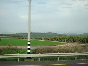 Photo: Banana plantations--who would have thought?