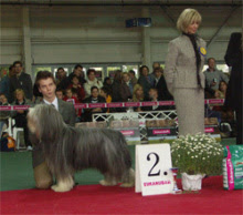 Photo: INT Show Budapest/H next day 1st place with ICh. Bright Glint´s Legendary Hugo Sunday, May 16, 2004