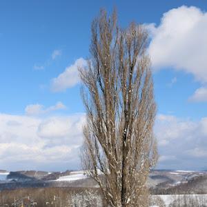 デミオ DE5FS スポルト 2008年式のカスタム事例画像 やま 【10563】さんの2021年02月22日09:57の投稿