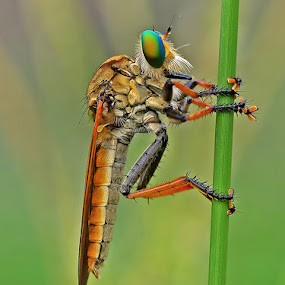 lonely by Anton Wahyudi - Animals Insects & Spiders