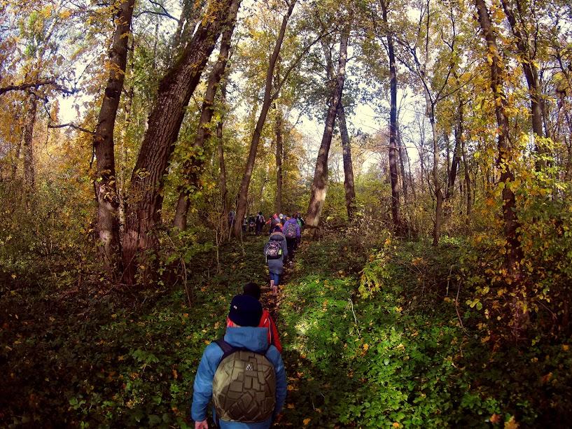 стежка лісом