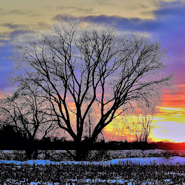 Watercolors by Kathy Woods Booth - Landscapes Sunsets & Sunrises ( watercolor, dusk, watercolors, sunset, tree, silhouette, cold, frosty )