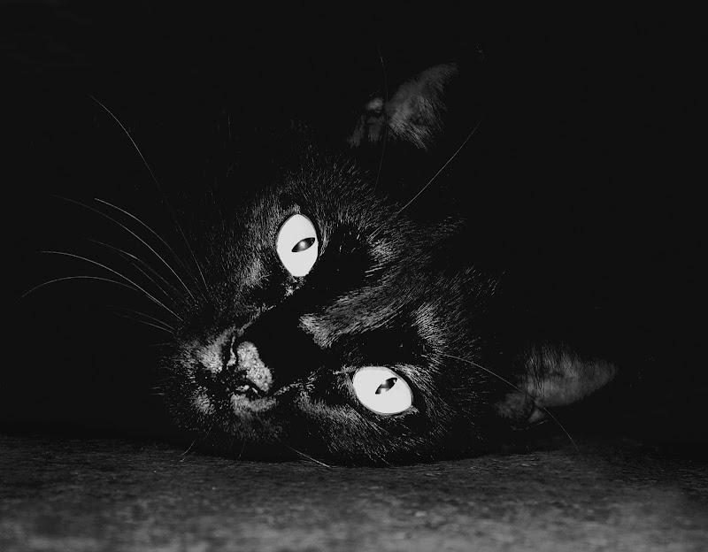 selfie felino di StefanoRegi