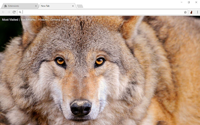 Wolf Hd Wallpapers Wolves New Tab Theme