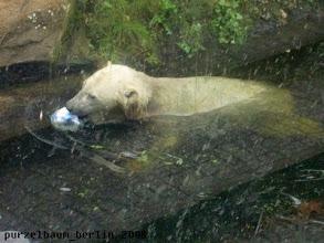 Photo: Knut ist mit Ball im Wasser unterwegs ;-)